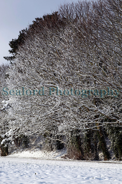 Snow covered trees Fort George ©RLLord 020209 1147 smg