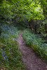 bluebell path Icart 170510 ©RLLord 9464 smg