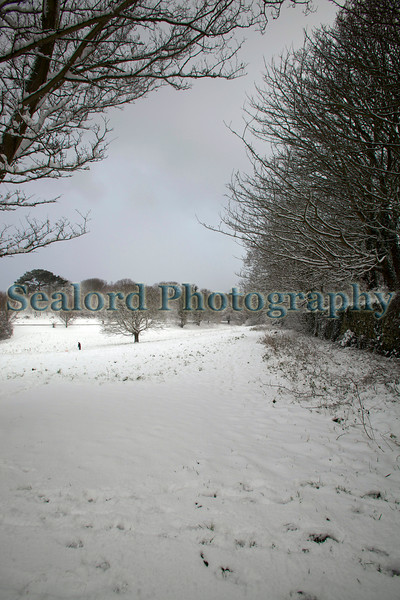 The snow covered Les Val des Terre, St. Peter Port, Guernsey after the heaviest snow fall in 18 years on the 2 February 2009.<br /> File No. 020209 1091<br /> ©RLLord<br /> fishinfo@guernsey.net