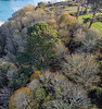 Trees in autumn at Moulin Huet on Guernsey's south coast
