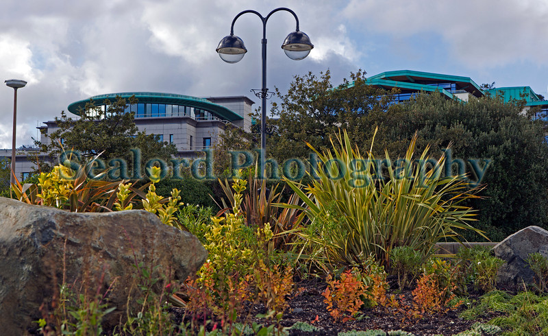 Flower and plant beds by the Petanque area next to the QE II Marina in St Peter Port