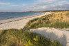 Vazon sand dunes in evening light, Guernsey