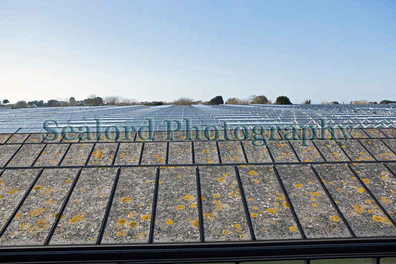 glasshouses Guernsey 160213 ©RLLord 4983 smg