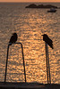 Two birds silhouetted by the shimmering sea