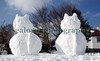 Guernsey snow cats tails ©RLLord 020209 1249 smg
