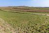 Torteval farm land 130316 ©RLLord 7376 smg