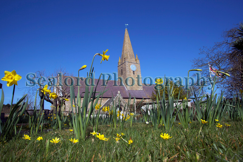St Martin parish church daffodils 140309 RLLord 2393 smg