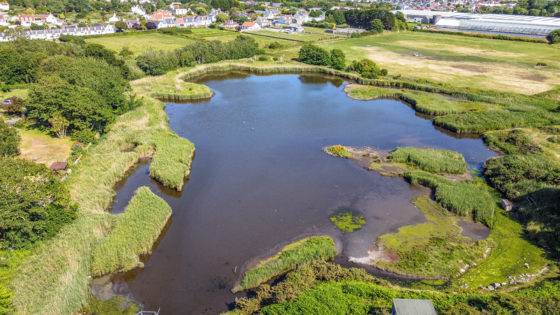 Vale pond in the Colin McCathie Nature Reserve, Guernsey