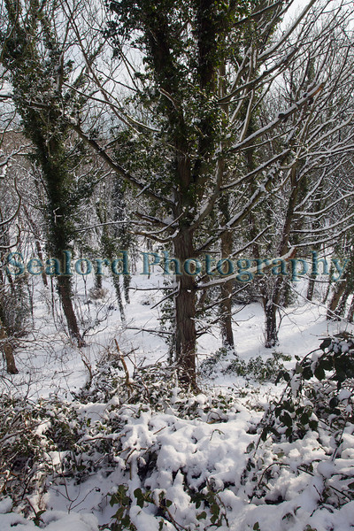 bluebell woods snow ©RLLord v1198 smg