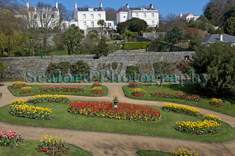 Candie Gardens tulip flower beds St Peter Port 180413 ©RLLord 7199 smg