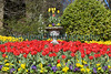 Candie Gardens tulips St Peter Port 180413 ©RLLord 7362 smg