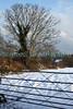 Snow in a field in St Martin's parish
