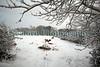 Guernsey heffer Montville snow ©RLLord 020209 1073 smg