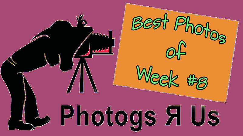 Photogs R Us Week #8
