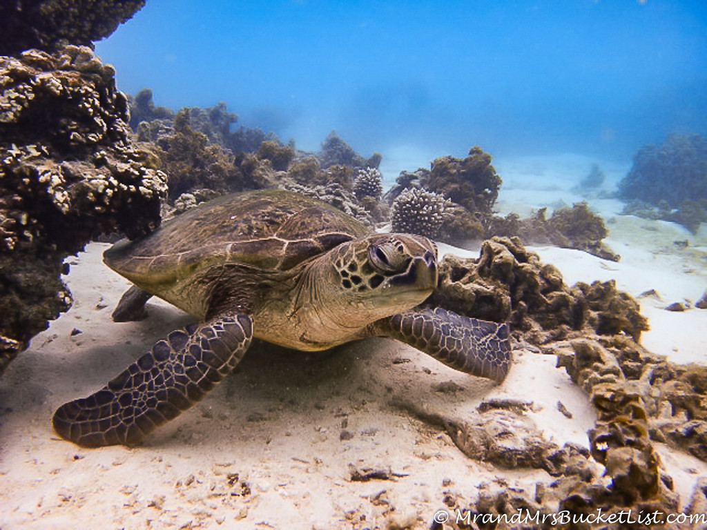 wildlife encounters in Western Australia - sea turtles