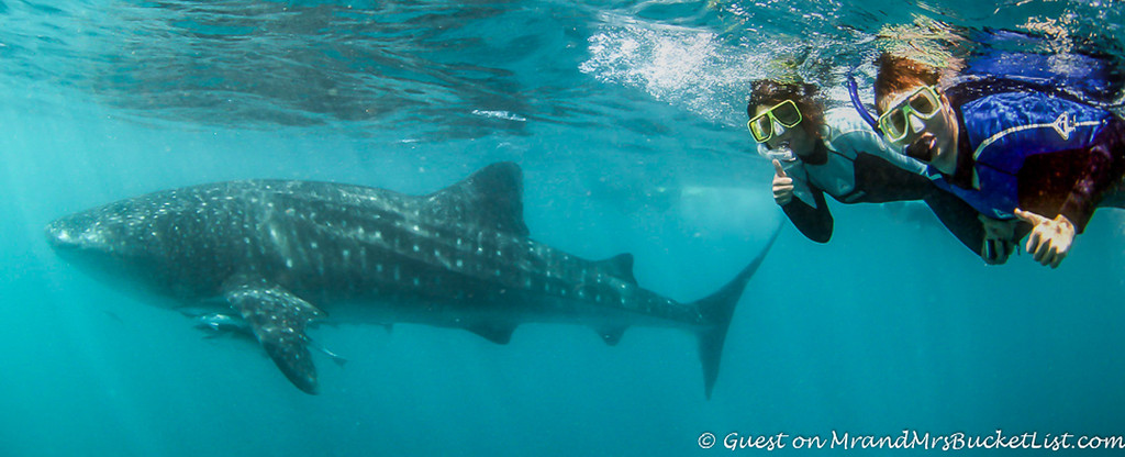 wildlife encounters in Western Australia - whale sharks