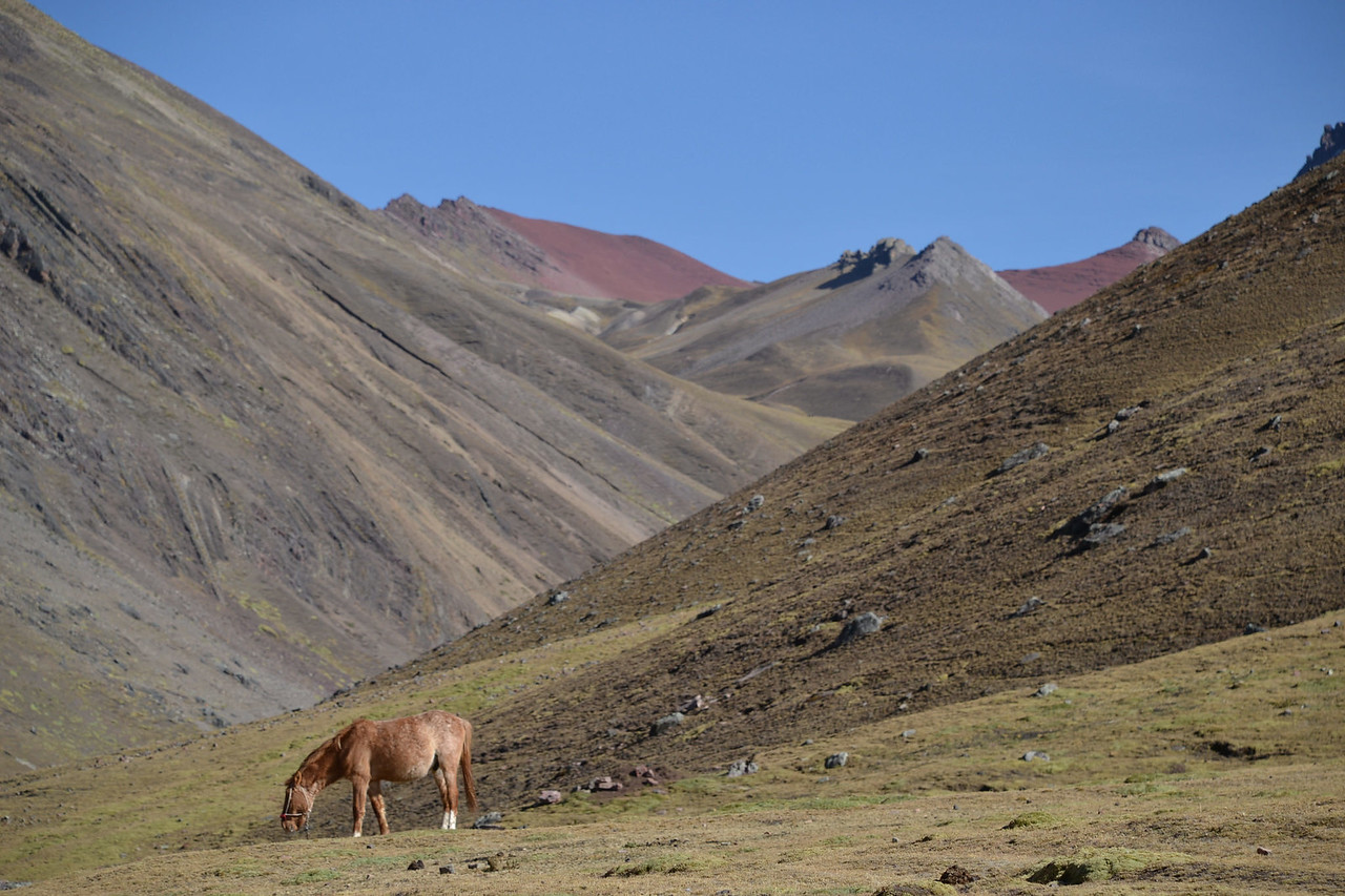 rainbow mountain valley horses