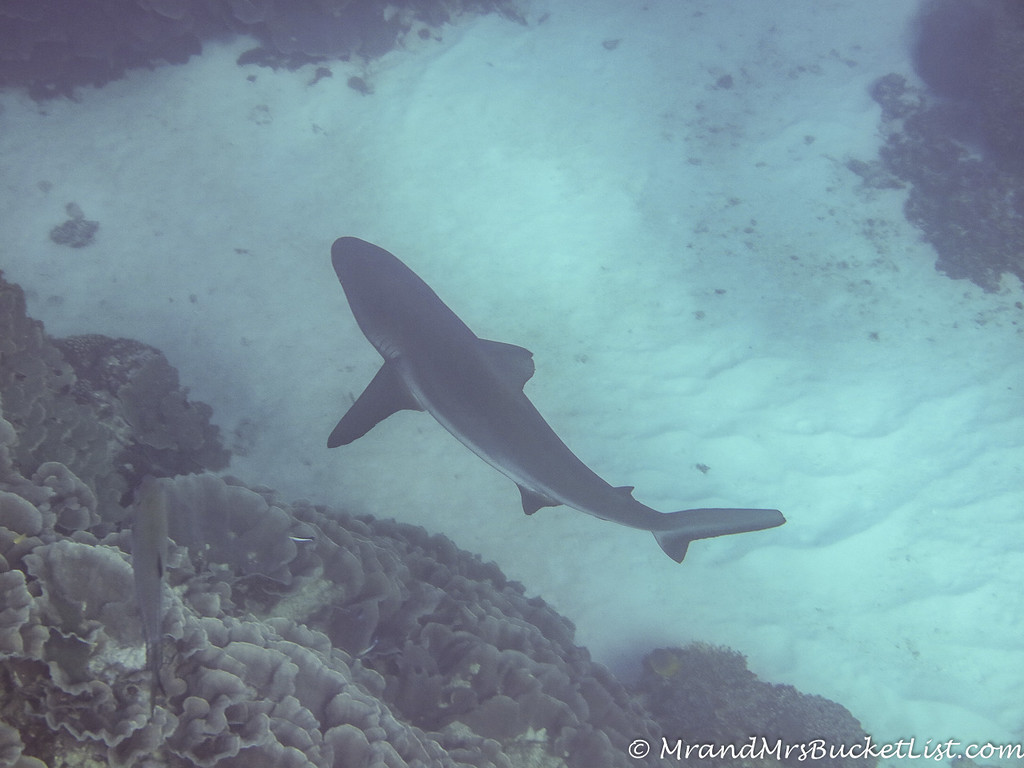 wildlife encounters in Western Australia - sharks