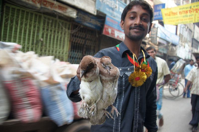 This Bangladeshi man holds up two birds as motion blur from a vehicle carrying large bags whizzes on by.