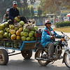 A motorbike hauls a trailer filled to the brim full of coconuts with two men sitting on top of the stack - Battambang, Cambodia.