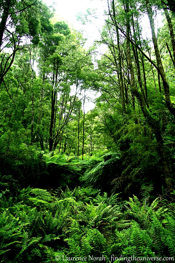 When I thought of Australia before I visited, lush verdant forest was not the first thing that sprang to mind. I was, it turns out, entirely wrong. Forests like this coastal rainforest in the Otways are spectacularly green and eminently explorable. Hurrah!