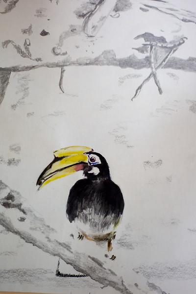 Pied Hornbill at Sungei Buloh, Singapore