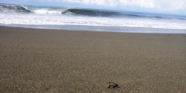 tutrles to the sea