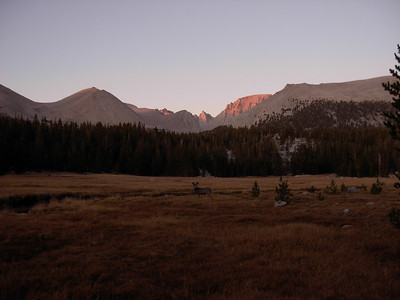 Sunset and some wildlife in a meadow along the route to Whitney