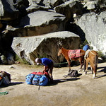 Donkey's do all the work carrying gear into our base camp in the Ishinca Valley.