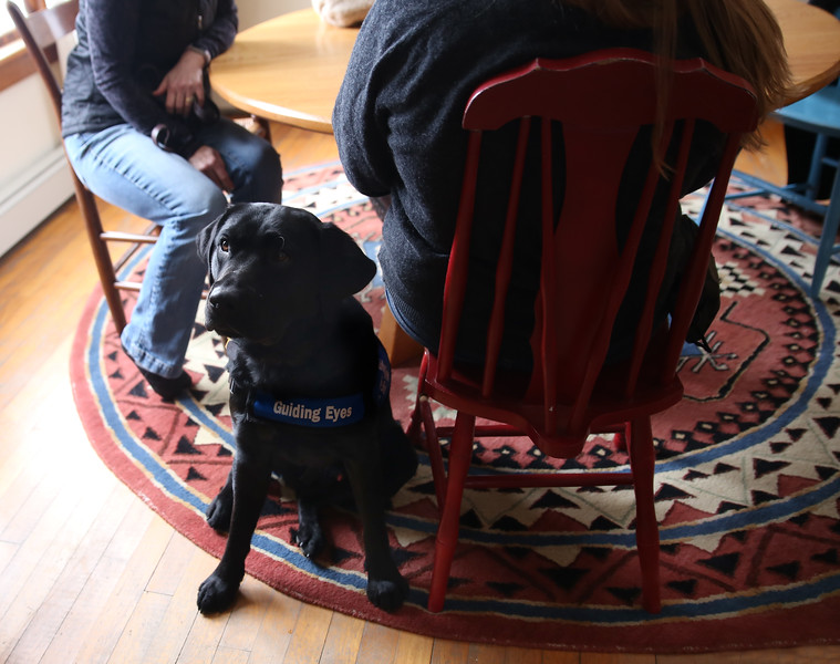 HOLLY PELCZYNSKI - BENNINGTON BANNER Harry, the Black Lab seeing eye dog helper patiently sits by his handler on Wednesday afternoon in Bennington.