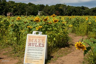 Shoreline Winefest-jlb-08-17-14-4678w