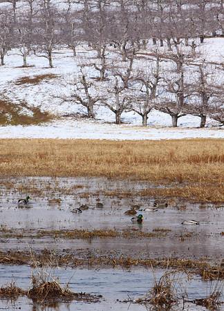 Bishops Orchards - seasonal photos