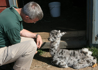 BishopsOrchards 09-24-05-IMG_3292 Keith with baby llama