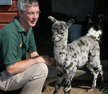 BishopsOrchards 09-24-05-IMG_3296 Keith with baby llama