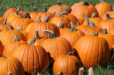 BishopsOrchards 09-24-05-IMG_3312b pumpkins