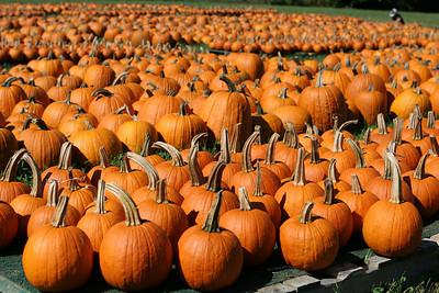 BishopsOrchards 09-24-05-IMG_3323 pumpkins-DOF med