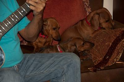 Maggie, Sammy, and Petey (P.T. Cruiser).