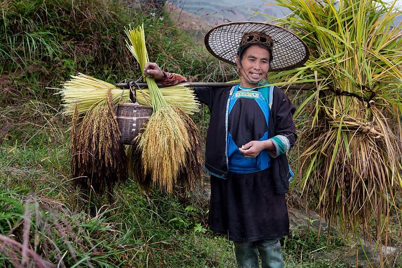 Rice harvesting. Dangniu, Chongjiang.