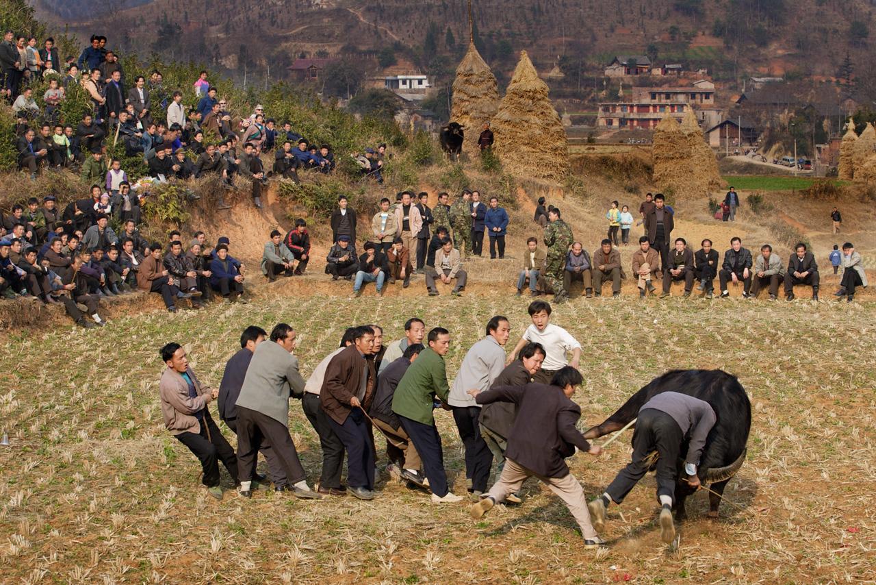 Bullfighting. Longchang.
