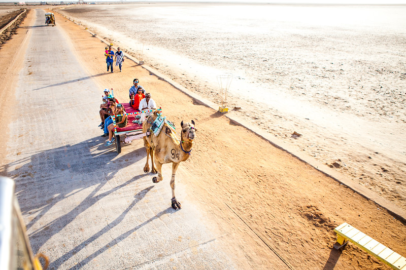 Camel ride at the White Rann of Kutch, Gujarat, India