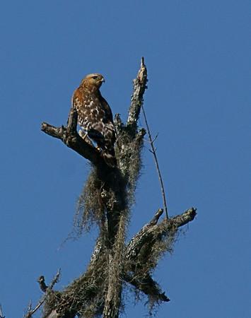 Birds at Gulf Coast Bird Obsrv. on 012110