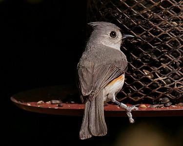 Gulf Coast Bird Observatory on 032210