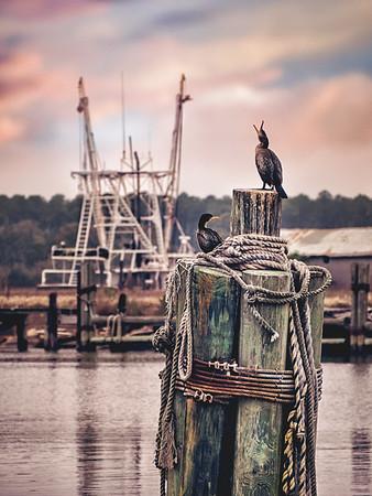 Kooky Cormorants