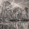 Pascagoula River Beauty (Sepia)