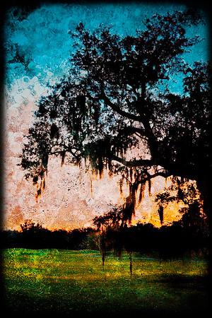 Audubon Park Sunset