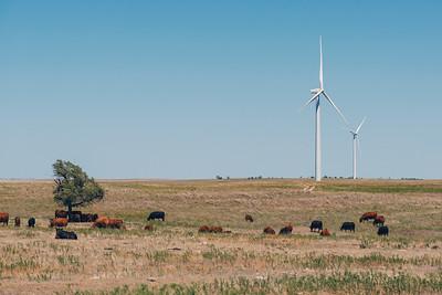 Texas Castaway Landscape