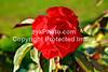 GulfCoast026-Red Flower