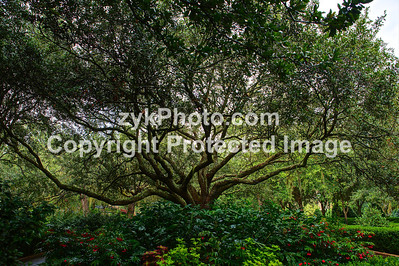 GulfCoast019-Bellingrath Oak