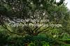 GulfCoast019-Bellingrath Oak