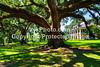 GulfCoast011-Houmas House  Plantation